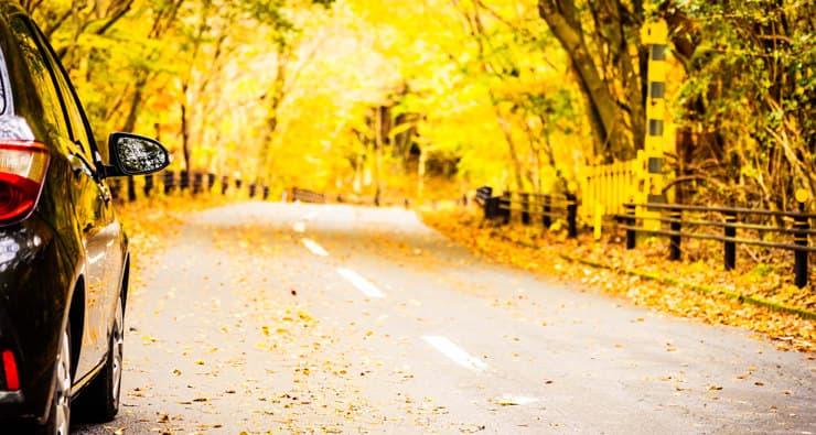 Cotxe a una carretera plena de fulles