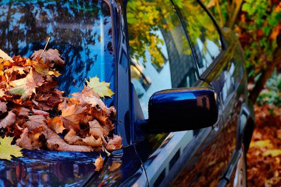 Cotxe a la tardor amb fulles sobre el parabrises