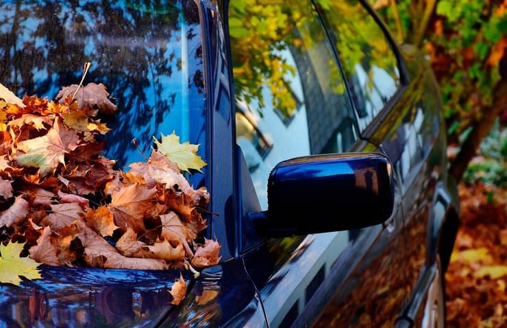 coche lleno de hojas